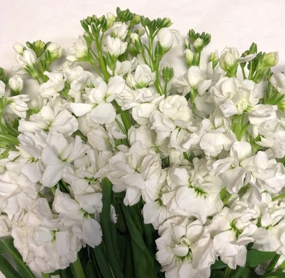 White Stock from Mangel Florist, flower shop at the Drake Hotel Chicago