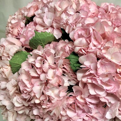 Pink Hydrangea from Mangel Florist, flower shop at the Drake Hotel Chicago