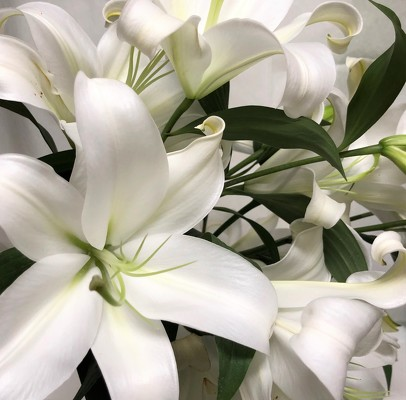 White Lily  from Mangel Florist, flower shop at the Drake Hotel Chicago