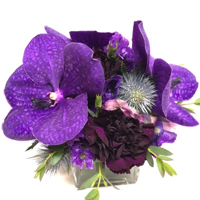 Purple Vanda Orchid Cube from Mangel Florist, flower shop at the Drake Hotel Chicago