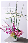 Dendrobium Orchids and River Cane Arranged from Mangel Florist, flower shop at the Drake Hotel Chicago